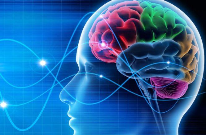 10 Fakta Tentang Otak yang Ditemukan Tahun 2018