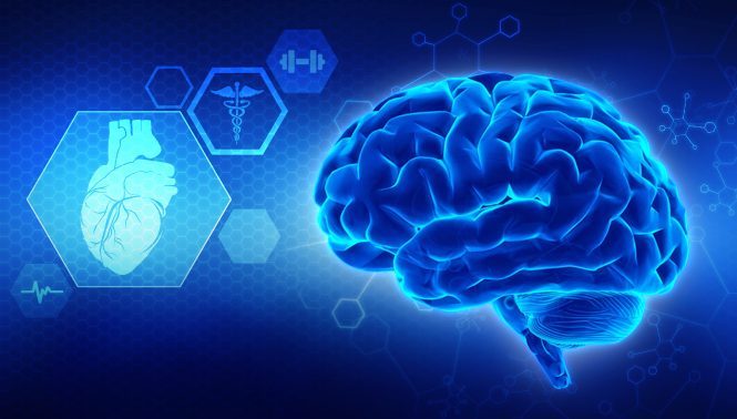 10 Fakta Tentang Otak yang Ditemukan Tahun 2018 Bag 2